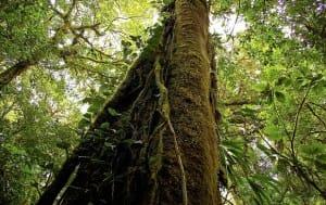 filière bois au Costa Rica en bonne santé