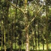 Aperçu d'une forêt du Costa Rica prêt du volcan Turrialba.
