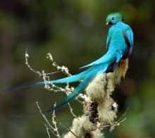 Garajonay et Quetzals, parcs jumelés
