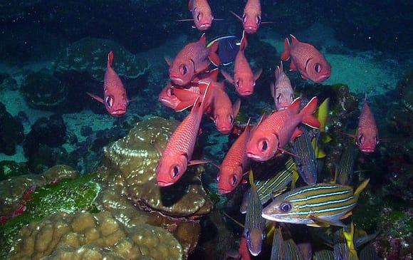 faune sous-marine Isla del Coco au Costa Rica