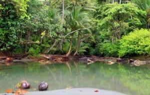mangrove du parc national Corcovado