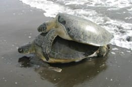 wwf-surveille-tortues-costa-rica-decouverte