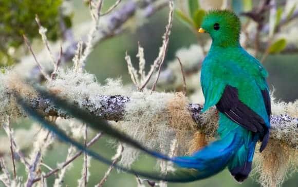Quetzal, symbole de liberté