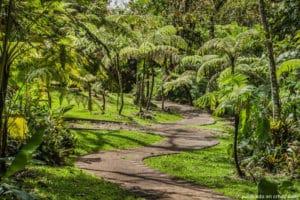 Les jardins botaniques de Lankester