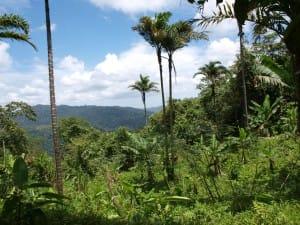 avion-sans-pilote-pour-surveiller-les-forets-du-costa-rica