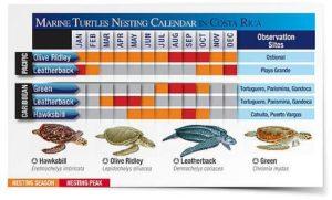 wwf-saisons-tortues-costa-rica-decouverte