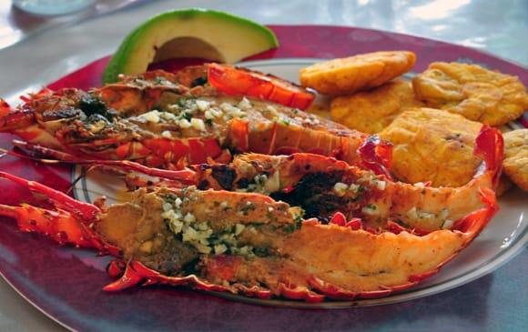 langouste-costa-rica-decouverte