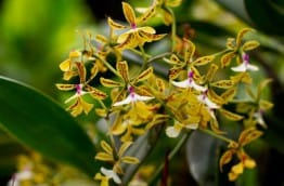 fete-orchidees-costa-rica-decouverte