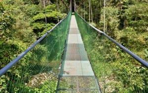 Tirimbina rainforest