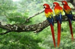parc-national-de-carara-costa-rica-decouverte