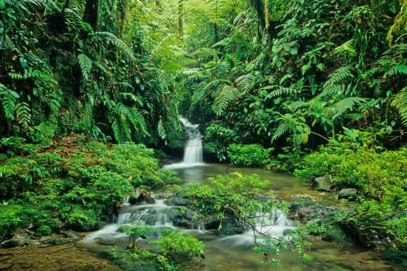 Cascade au parc national Braulio Carillo