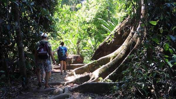 Randonnée au coeur du parc national Corcovado