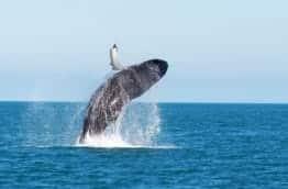 marino-ballena-baleine-costa-rica-decouverte