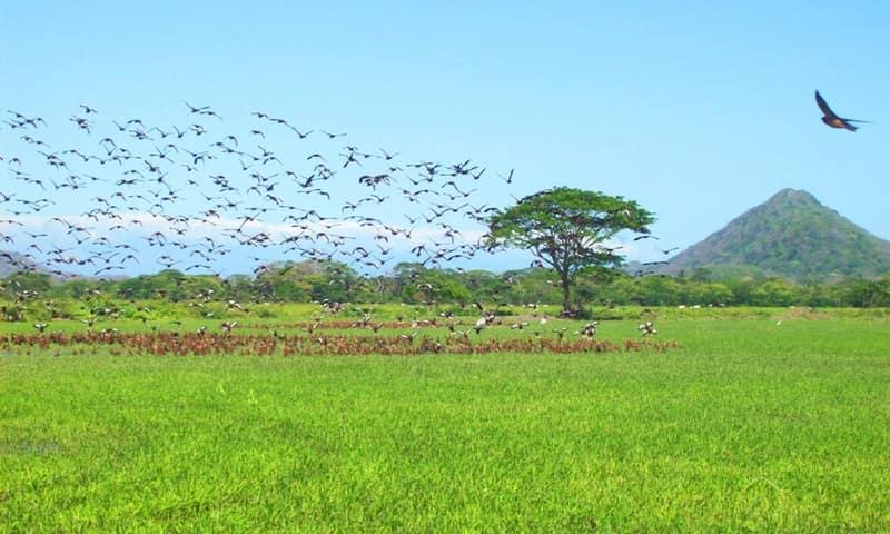 palo-verde-oiseaux-costa-rica-decouverte
