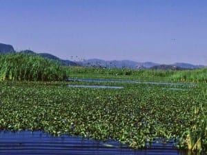 lagune-parc-national-palo-verde