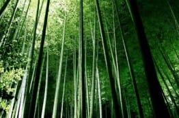 bambou-soyez-ecolos-costa-rica-decouverte