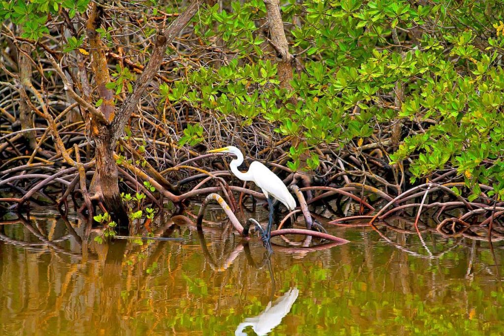 mangroves-costa-rica-decouverte
