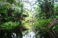 notre-stagiaire-a-tortuguero-rio-las-palmas-turtle-beach