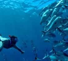 j-ai-teste-pour-vous-Corcovado-La-Sirena-plongee-banc-poissons