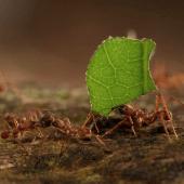 Nos amis les fourmis