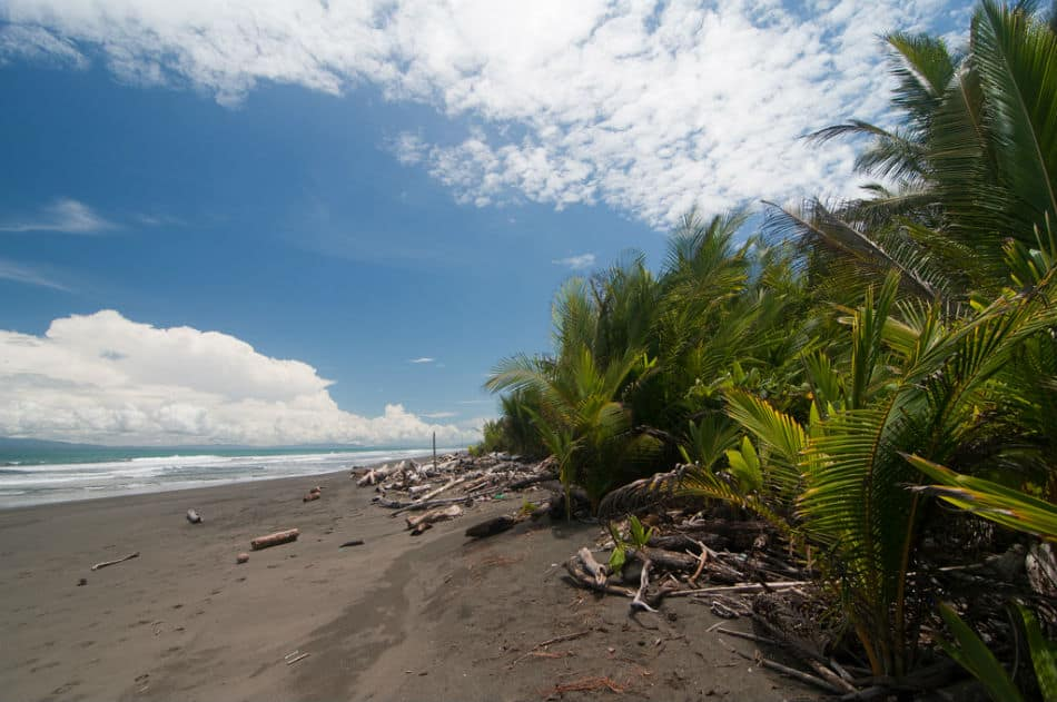 plaga-zancudo-golfito-costa-rica-decouverte