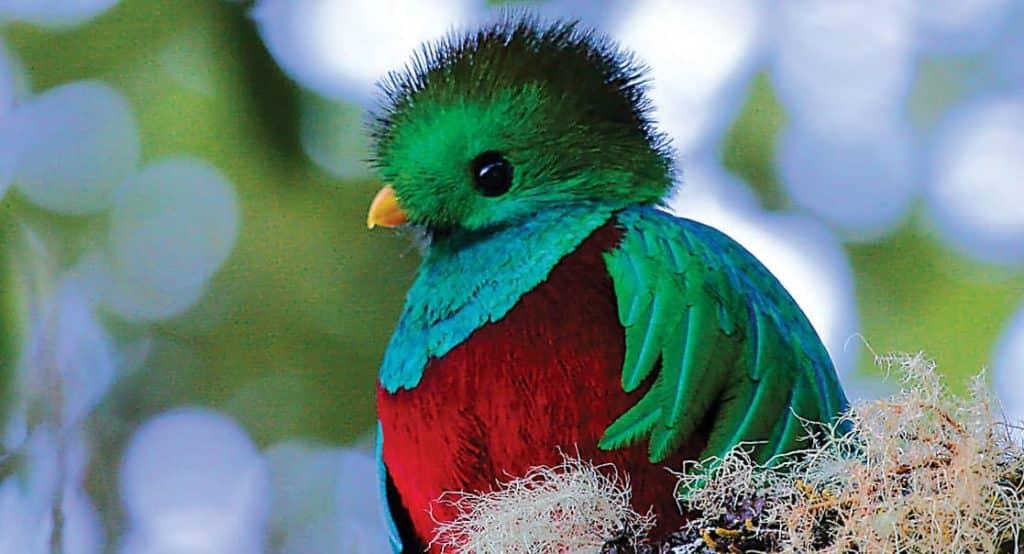 perles-oiseau-costa-rica-decouverte