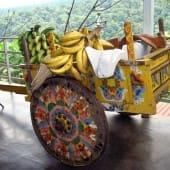 Charette décorée et bananes a Sarchi