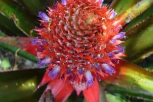 Des fleurs extravagantes