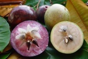 Pomme de lait ou caimite