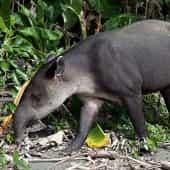 Symbole de l'écotourisme au Costa Rica