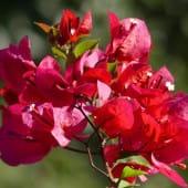 Des fleurs et des couleurs envoutantes