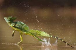 Circuit Iguane au Costa Rica pour ceux qui aiment prendre le temps de la découverte