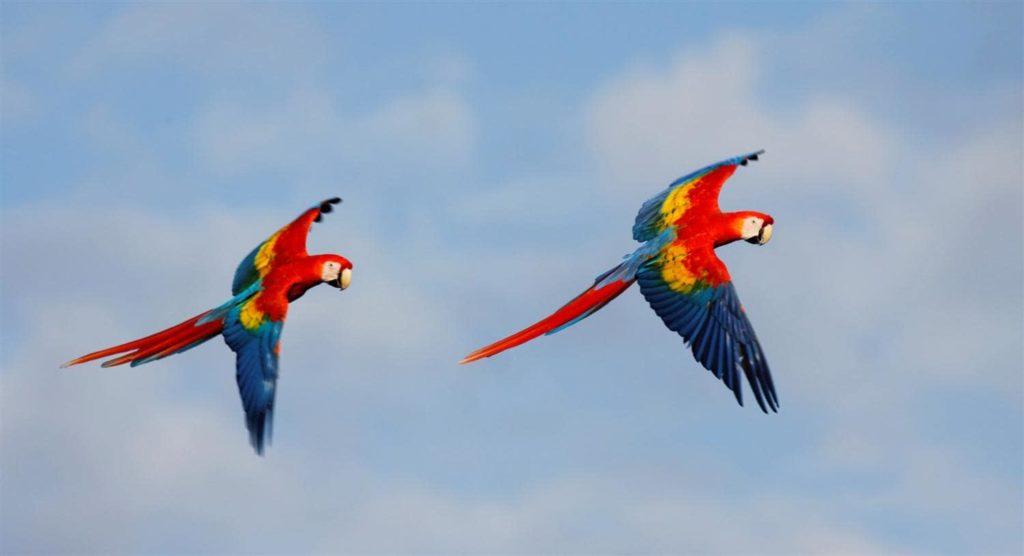 ornithologie-2-costa-rica-decouverte