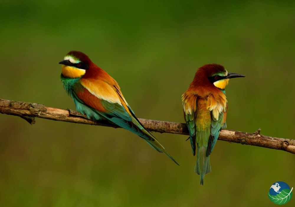 ornithologie-costa-rica-decouverte