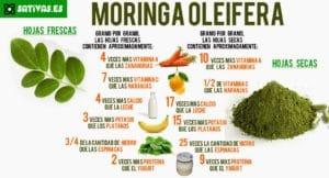 Tout savoir sur la Moringa - Information nutritionnelle
