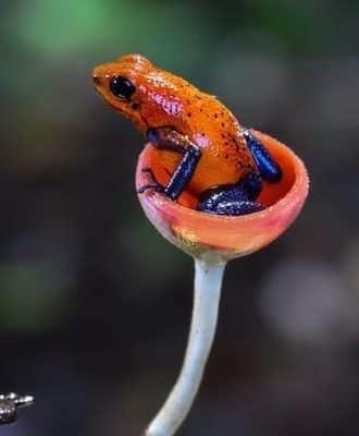 Le circuit grenouille est idéal pour ceux qui veulent un voyage grandeur nature au Costa Rica
