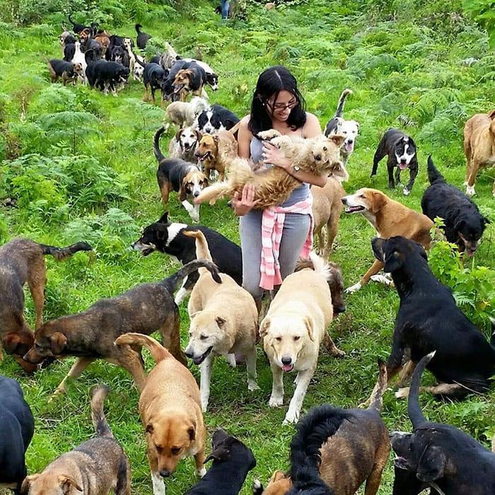 zaguates-chiens-costa-rica-decouverte
