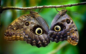 papillon-pacuare-costa-rica-decouverte