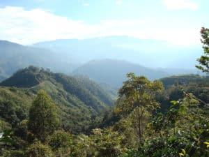 tarrazu-cafe-costa-rica-decouverte