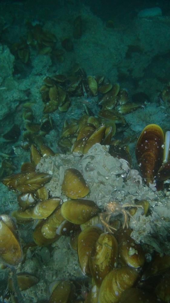 moules-profondes-costa-rica-decouverte