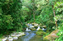 savegre-riviere-costa-rica-decouverte
