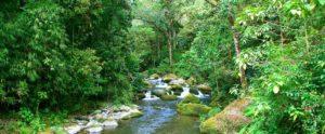 savegre-riviere-costa-rica-decouverte