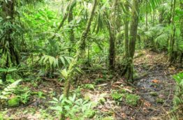 sentier-pocosol-costa-rica-decouverte