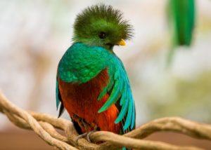 biodiversite-costa-rica-decouverte