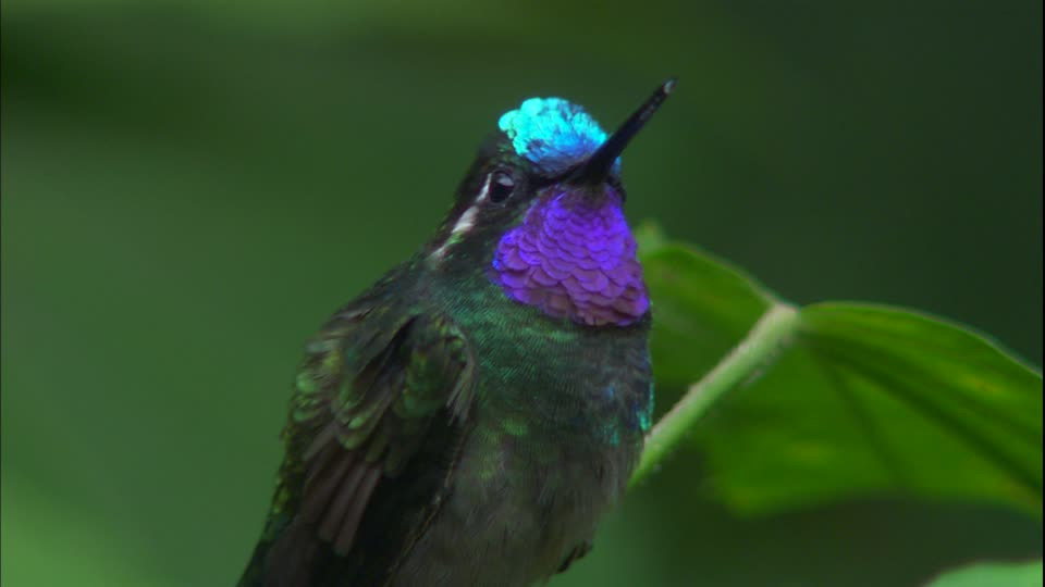 colibri-costa-rica-decouverte