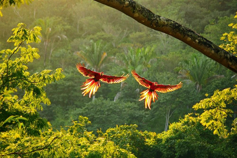 nat-geo-ara-costa-rica-decouverte