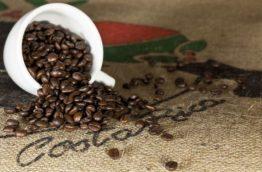 Hausse-de-la-production-de-cafe-biologique-Costa-Rica