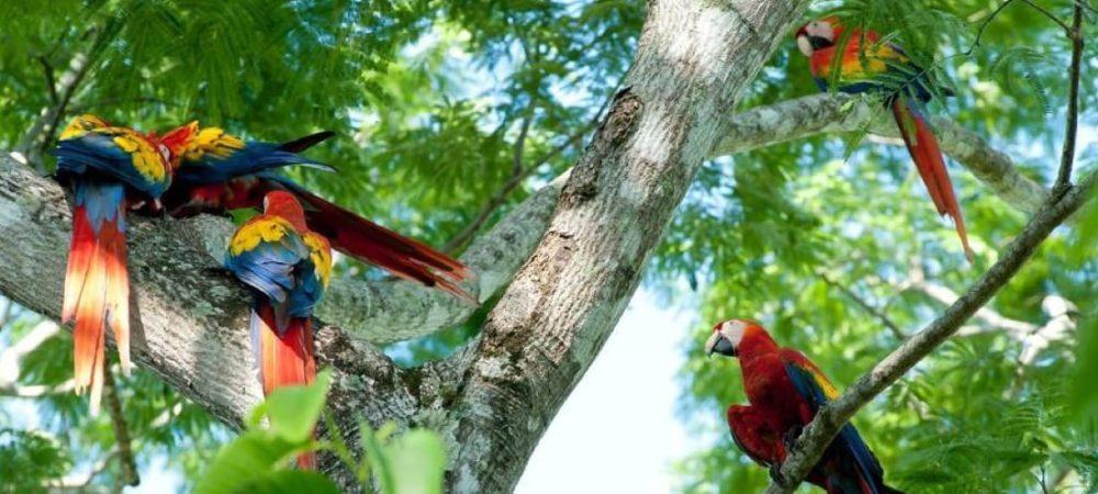 un voyage sur mesure au Costa Rica pour admirer les aras macaws