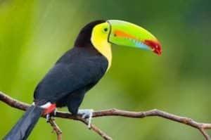 Un voyage sur-mesure pour découvrir le Toucan arc-en-ciel au Costa Rica