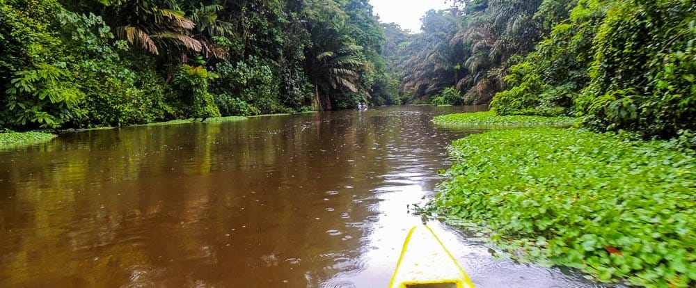 tortuguero-canal-costa-rica-decouverte
